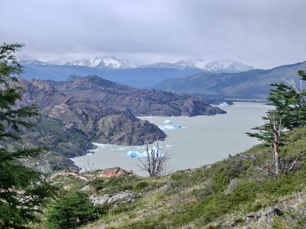 Vorboten des Grey Gletschers