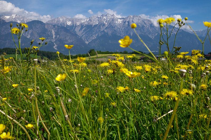 Sommerwiese Tirol Karwendelgebirge