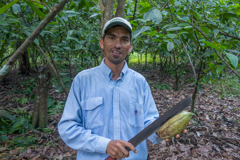 Kakao Farm Sierra Nevada Karibikküste Kolumbien
