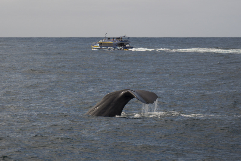 Kaikoura Walbeobachtung Neuseeland Südinsel Highlight