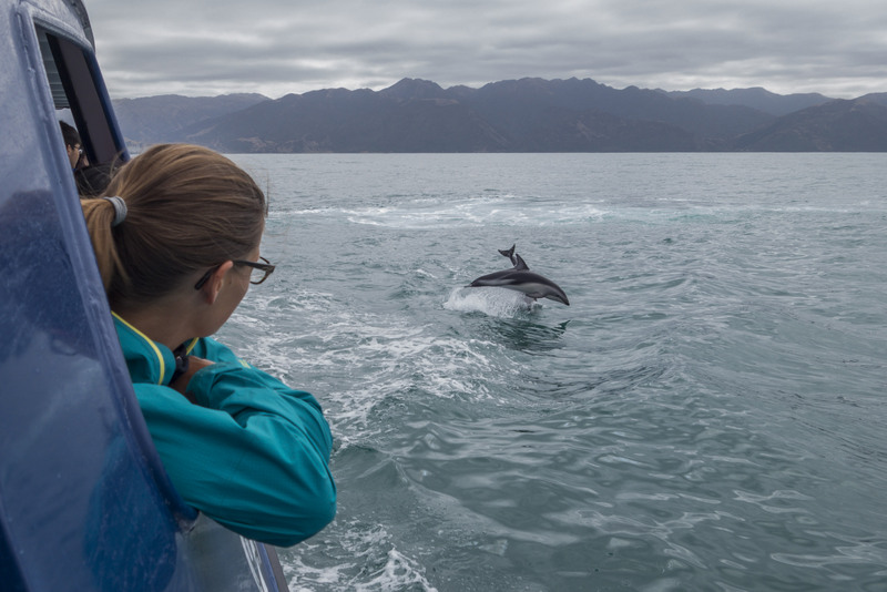 Whale- and Dolphinwatching in Kaikoura (ein teurer Spaß)