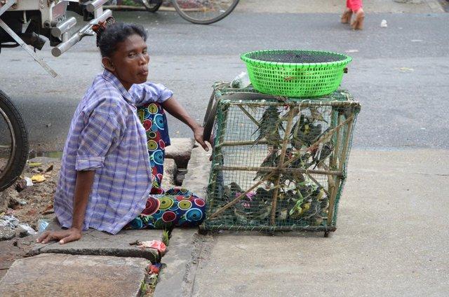 Myanmar Yangon Straßen von Yangon - Verkauf von Vögeln