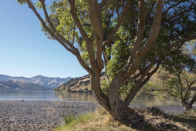 Neuseeland Campingplatz Raodtrip Banks Peninsula
