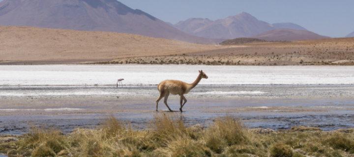 Meine Reiseroute durch Peru, Bolivien und Chile – inkl. einem Buchtipp für Peru