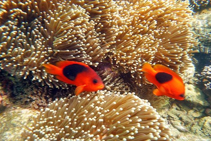 Aktivurlaub Thailand Schnorcheln Fische