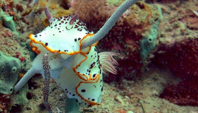 Aktivurlaub Thailand Tauchen Krabi