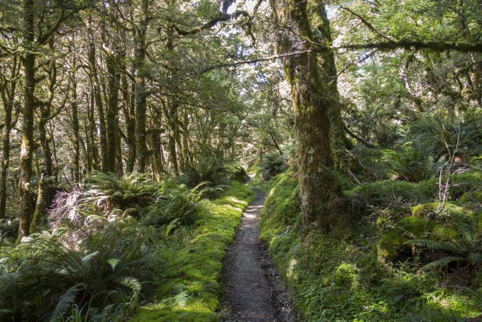 Wandern in Neuseeland Caples & Greenstone Track