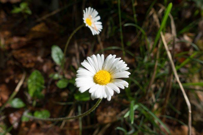Wanderung im Kaisertal Blumen im Wald
