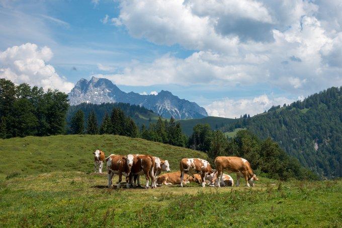 Wandern in Tirol Blick von der Angerlalm