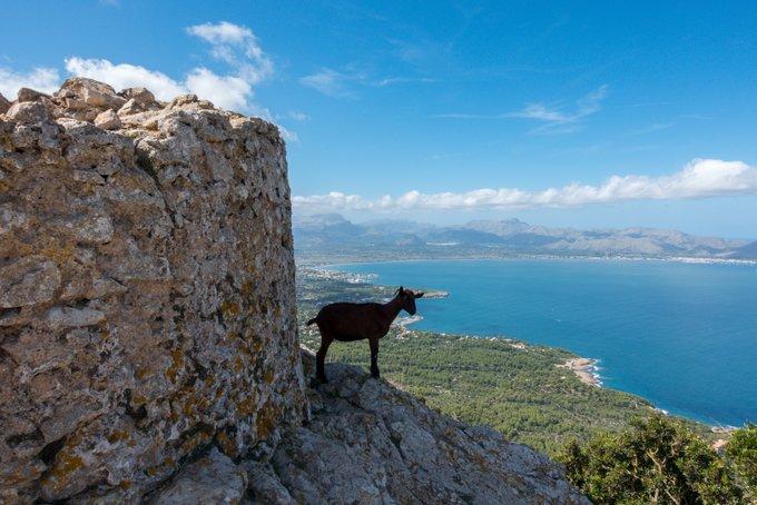 Wandern Mallorca Wanderung Talaia D'Alcudia (7)