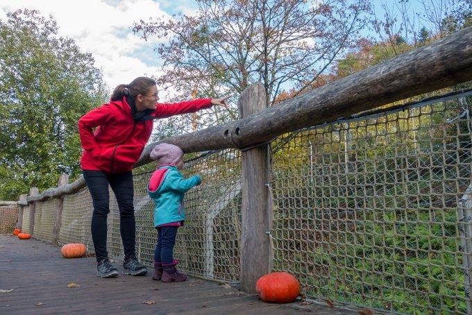 Ferien Schwarzwaldzoo mit Kleinkind