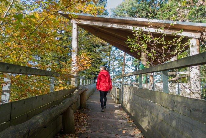 Schwarzwald Baumkronenweg Waldkirch