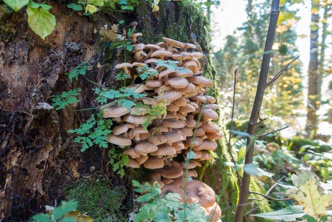 Wandern im Herbst mit Kindern Pilze