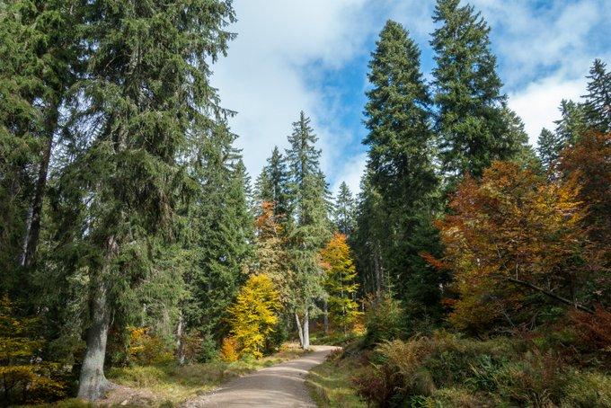 Wanderwege im Herbst mit Kindern