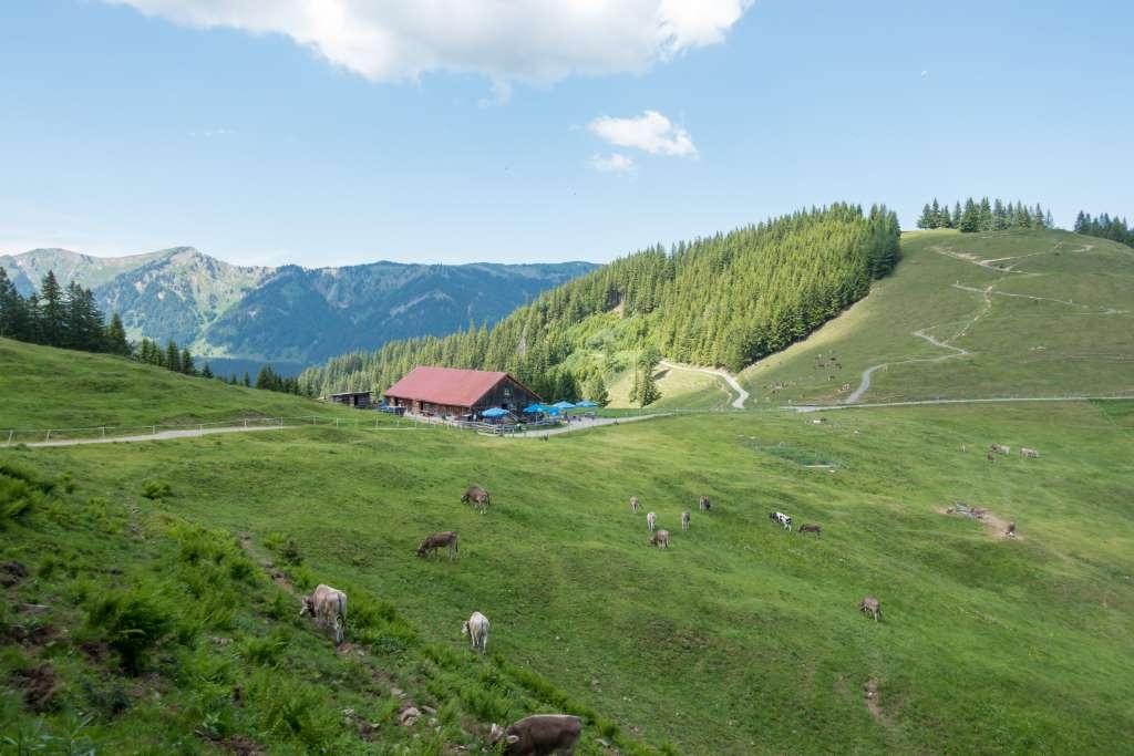 Allgäu Sommerurlaub Alpe Fahnengehren
