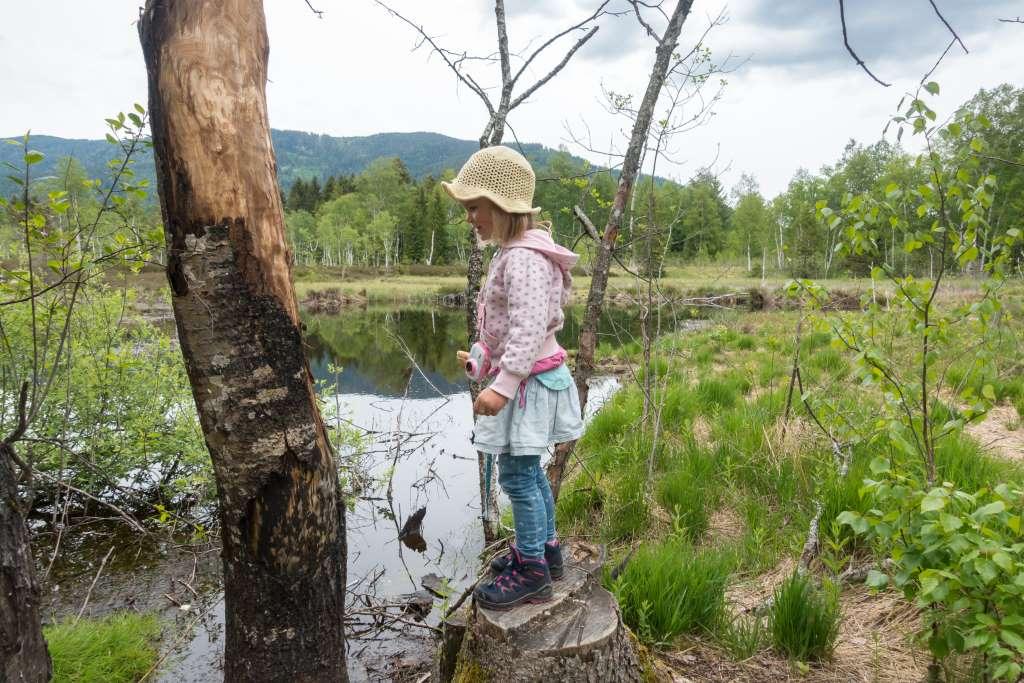 Wandern mit Kindern Chiemgau Moor