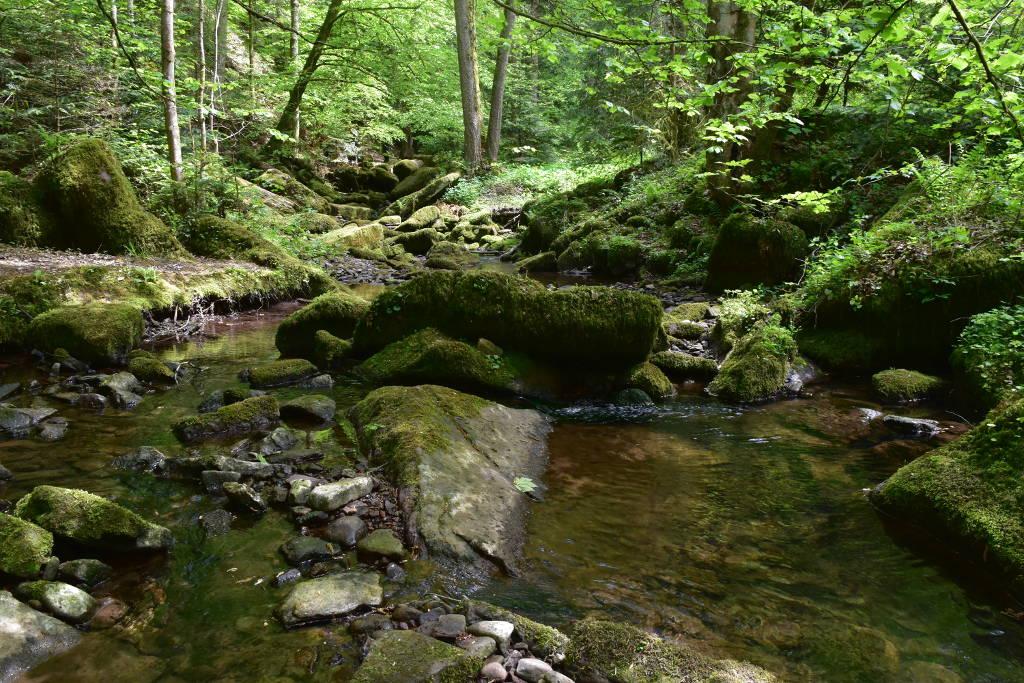 Monbachtal Wandern Nordschwarzwald
