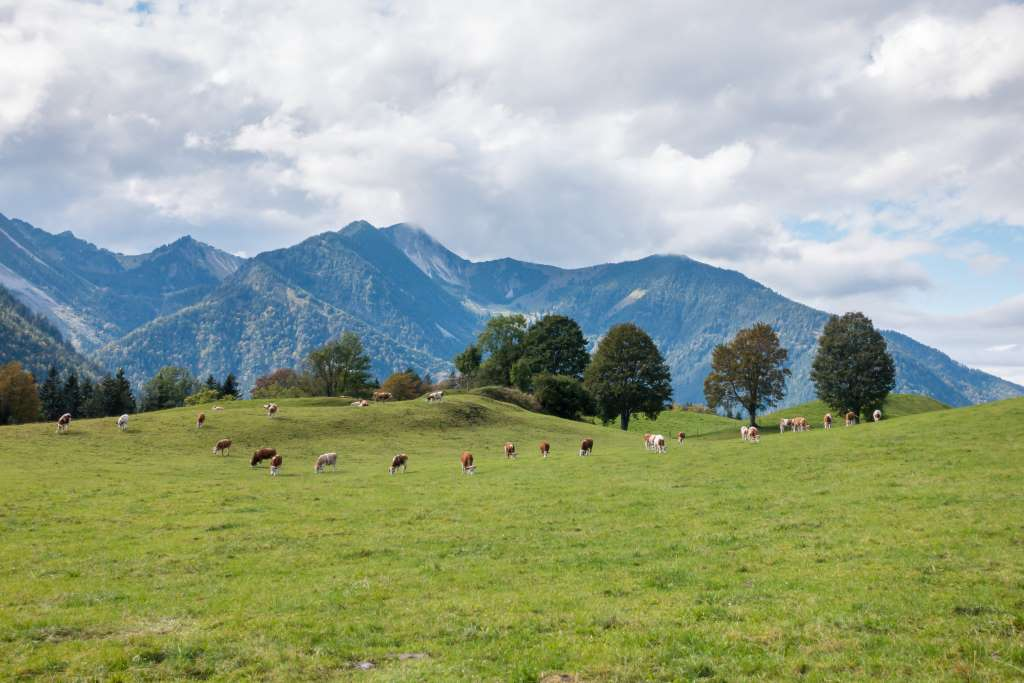Wandern Münchener Umland Bayrischzell