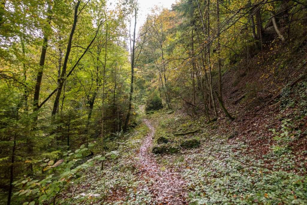 Wandern im Herbst Ammersee