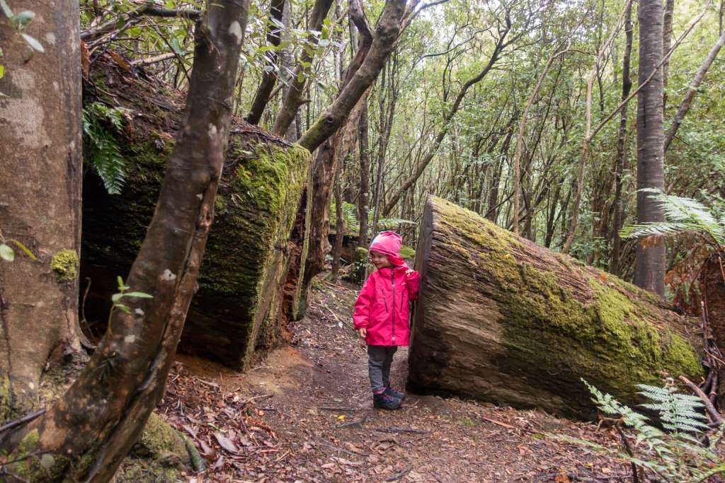Wandern im Wellington Park Tasmanien