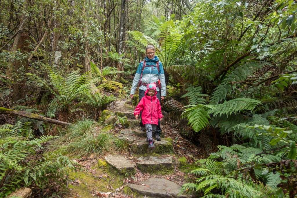 Wanderung Silver Falls Tasmanien Wellington Park