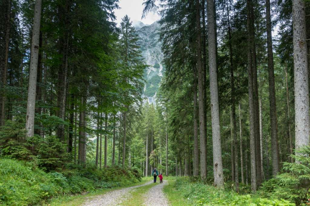 Ausflug Wald Kinder Packliste
