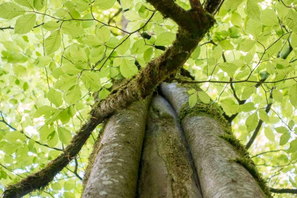 Wald mit Kindern Tipps zum Loskommen